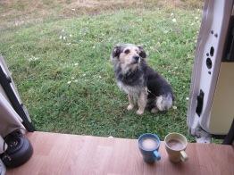 Bob the stray dog in Bulgaria