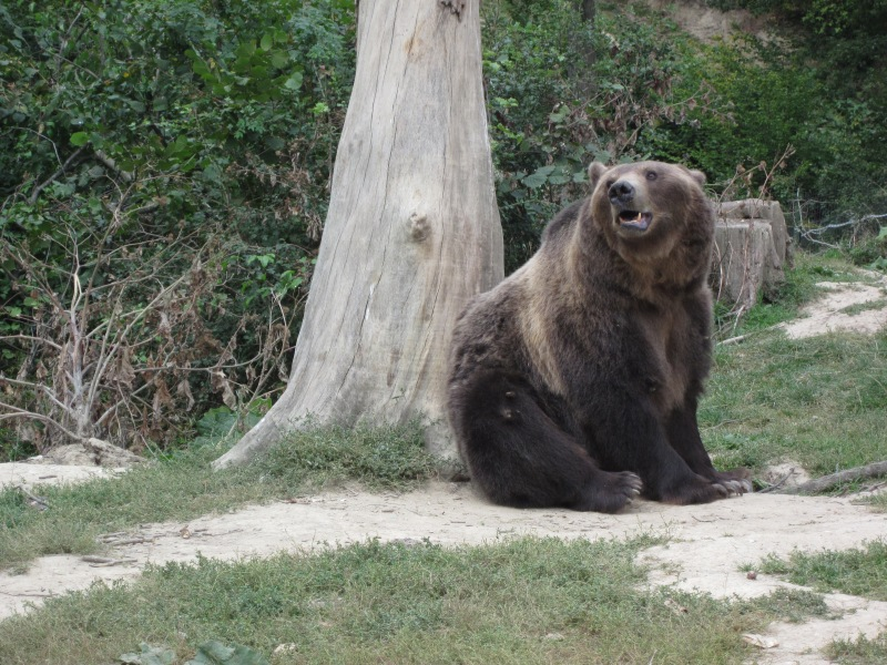 One of the many rescued bears that now live at LiBEARty