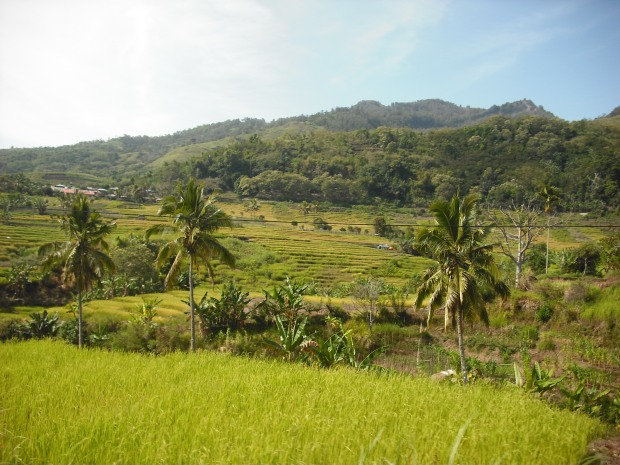 The beautiful surroundings of moni